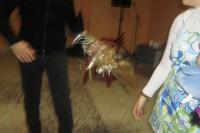 Carnevale - I Tindl 2011 (67/75)
