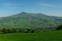 Primavera Dragonetti (1/1)
